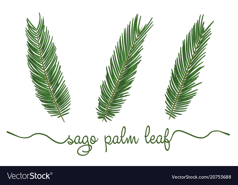 Leaves of sago palm elements set botany hand
