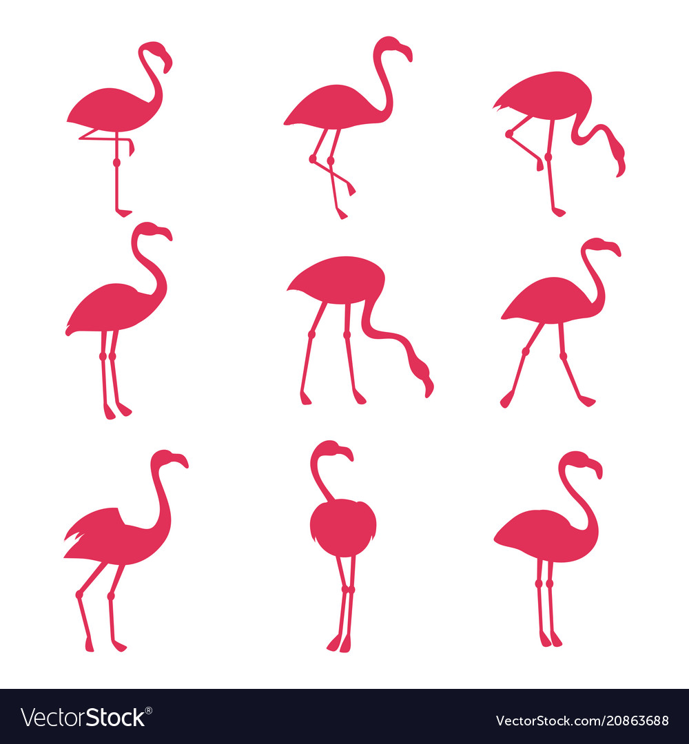Pink flamingo silhouetes isolated on white