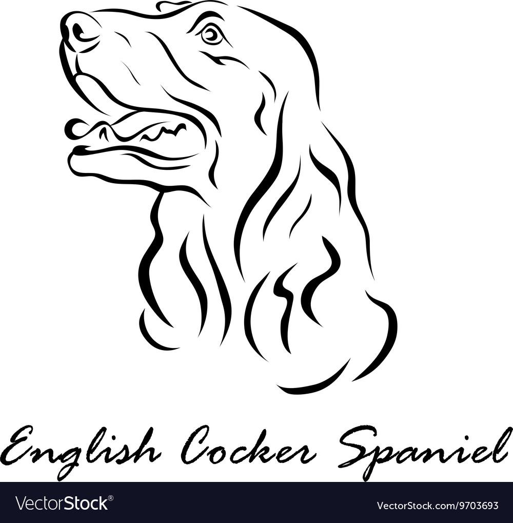 English Cocker Spaniel vector image