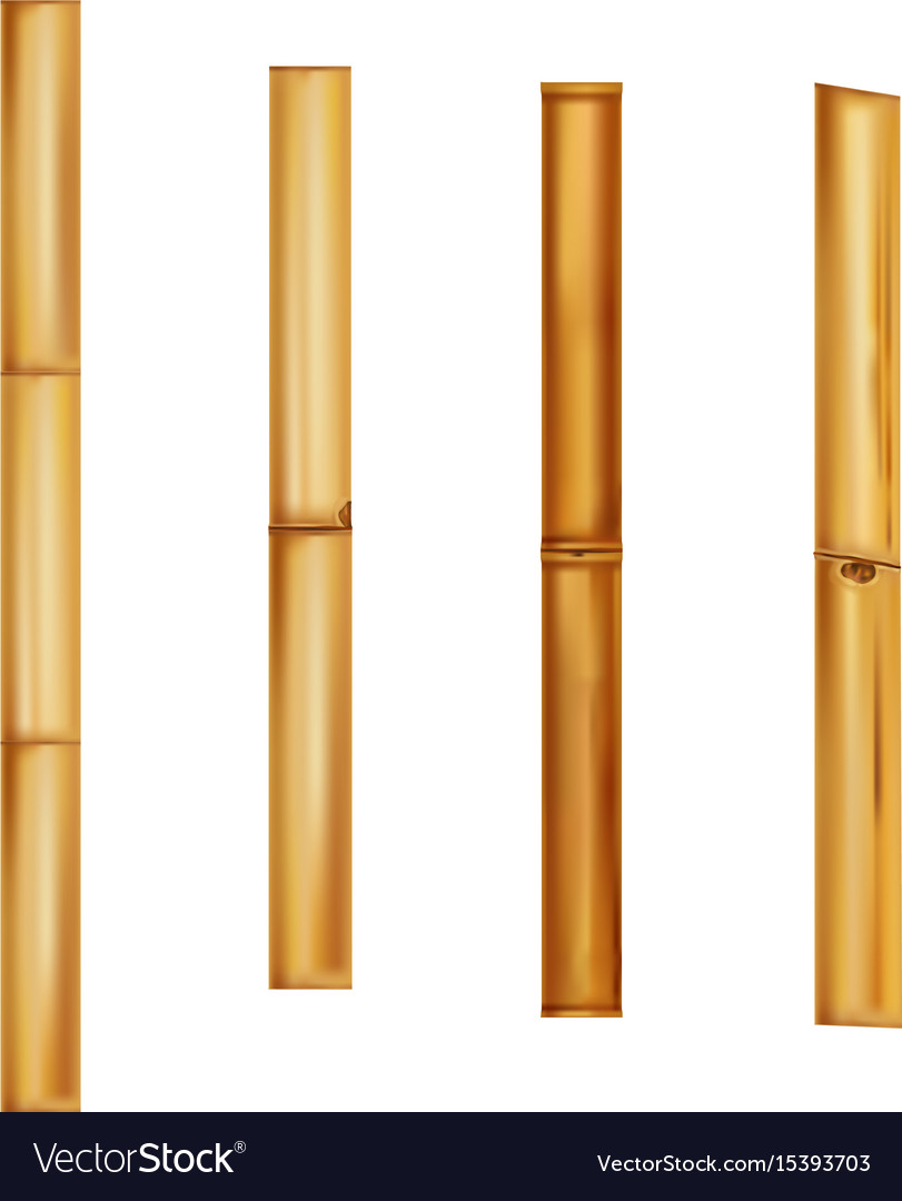 Bamboo stems realistic brown sticks vector image