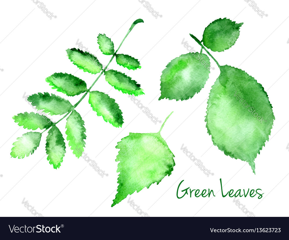 Set of green abstract watercolor leaves