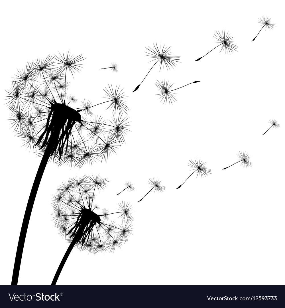 Black silhouette of a dandelion on white