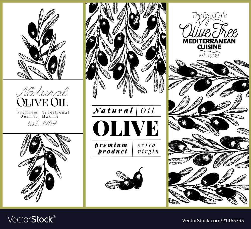 9390d08488c Olive tree banner set hand drawn vintage Vector Image