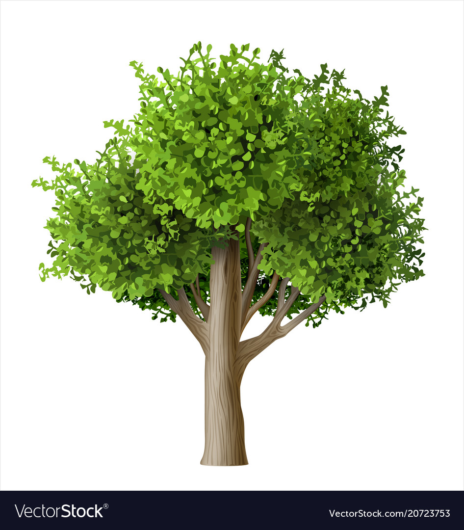 Realistic tree with leaves vector image