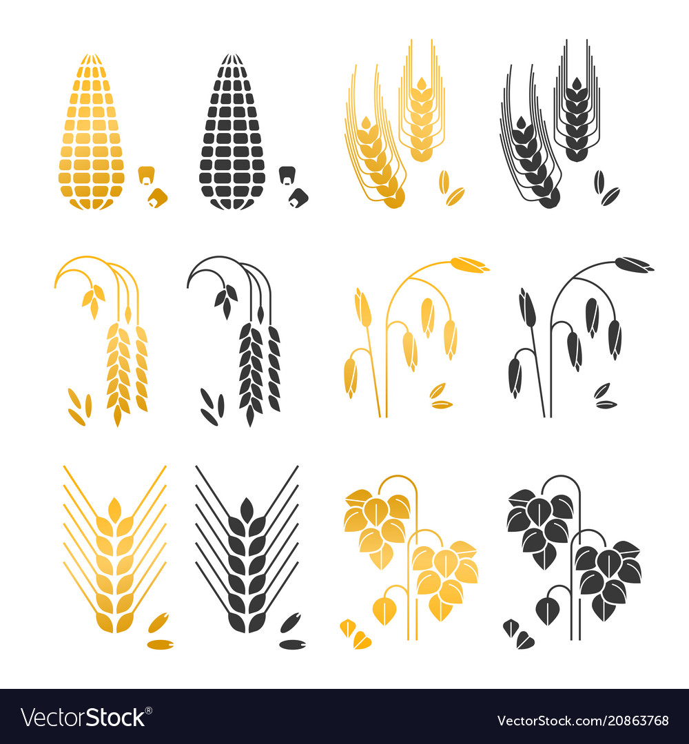 Black and gold cereal grains icons rice