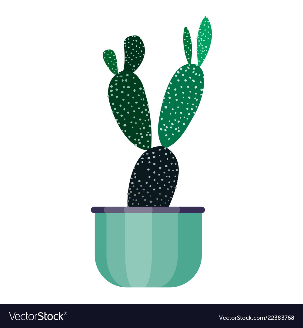 Green house plant in pot leaf cactus flower flat