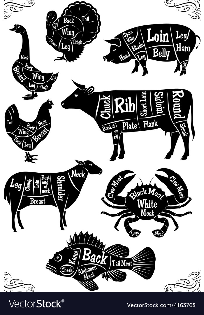 Set of diagrams of sections of different animals