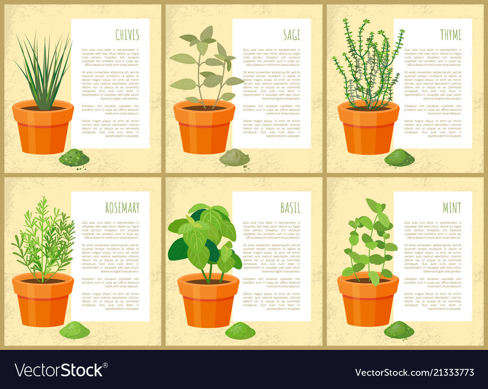 Edible indoor plants used as seasoning for salads on house plant propagation, house plant identification guide, house plant wall, house plant bugs identification, house plant identification by leaf, house plant name, tropical plant id, house plant identification by flower, house plant pests, aquarium plant id,