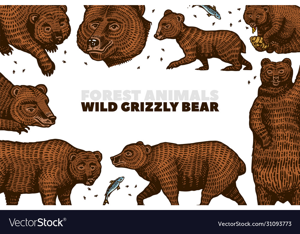 Grizzly bear background brown wild animals in