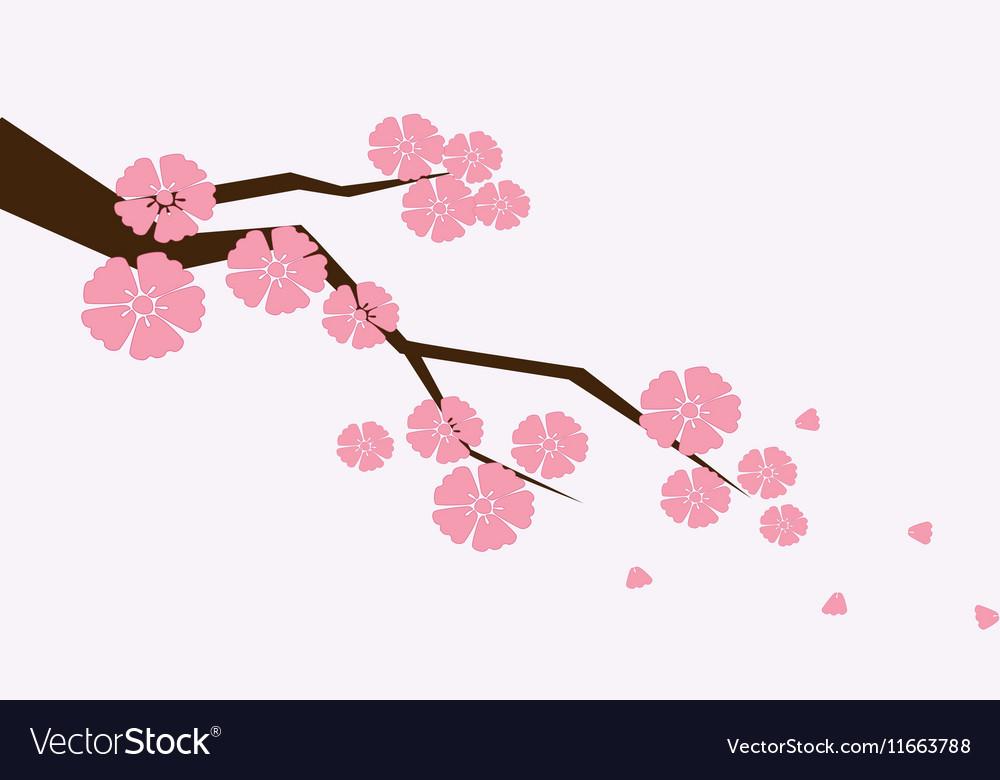 Branch of sakura with flowers Cherry blossom