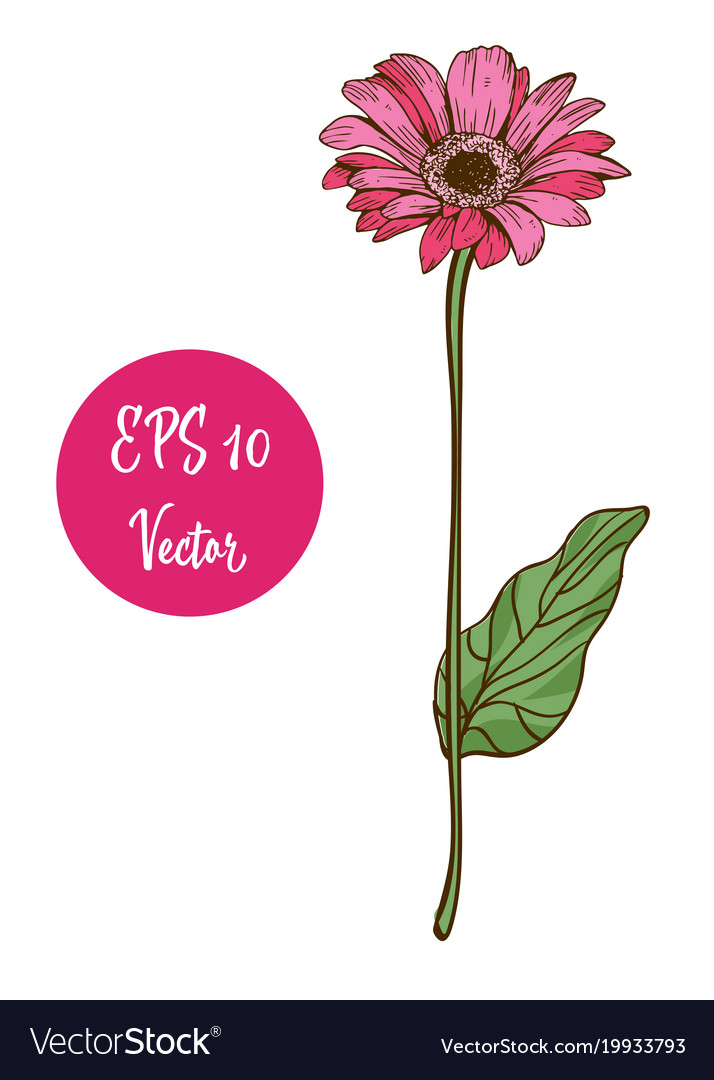 Single pink daisy flower beautiful royalty free vector image single pink daisy flower beautiful vector image mightylinksfo