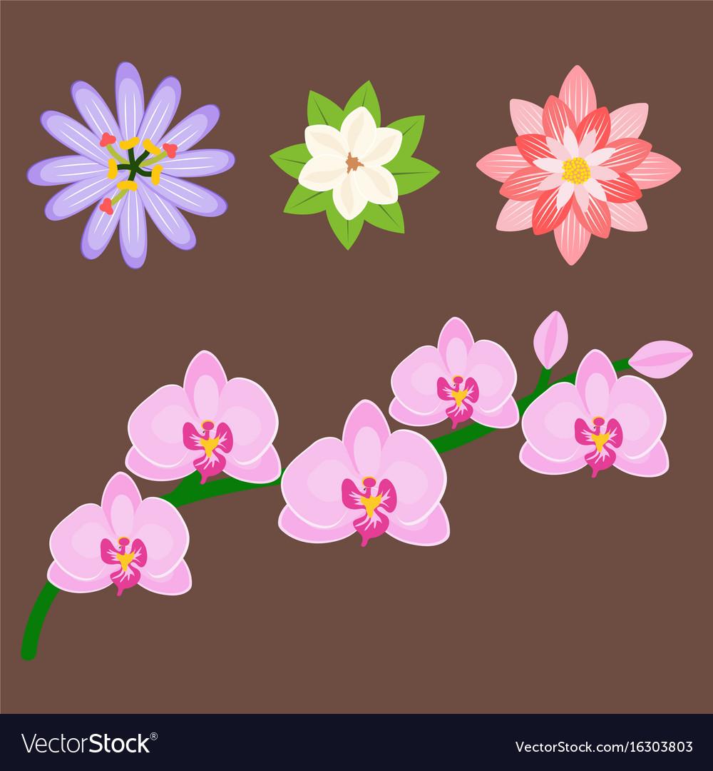 Beautiful tropical flower set design summer plants beautiful tropical flower set design summer plants vector image izmirmasajfo