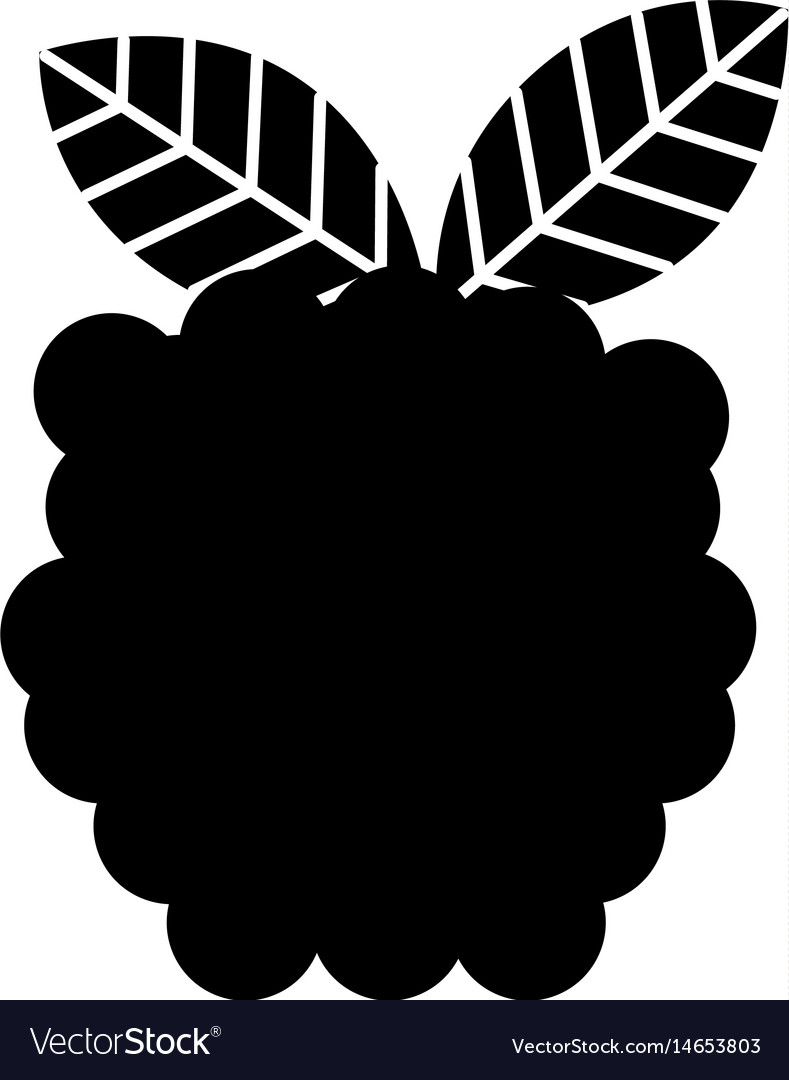 Blackberry fresh fruit isolated icon vector image