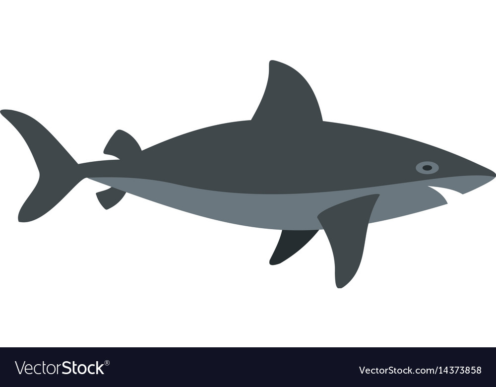 Grey shark fish icon isolated