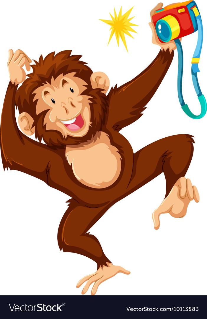 Cute monkey using camera