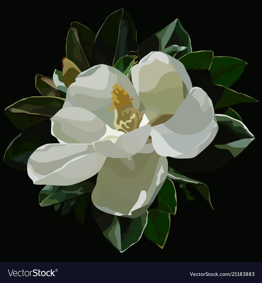Painted Large Blossomed White Magnolia Flower On A