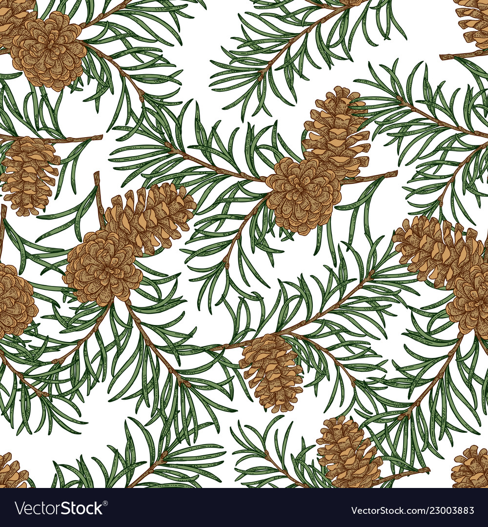 Seamless pattern with hand drawn pine cones and