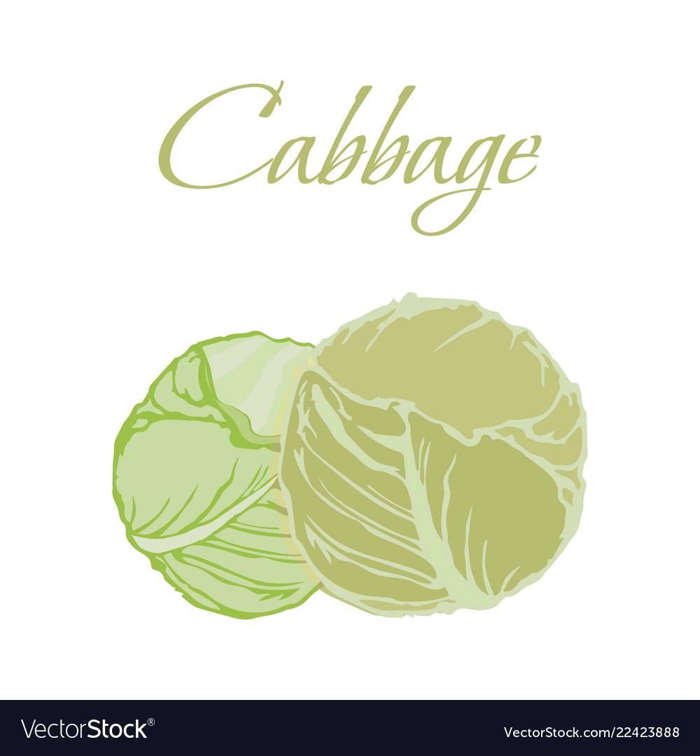 Tasty veggies cabbage