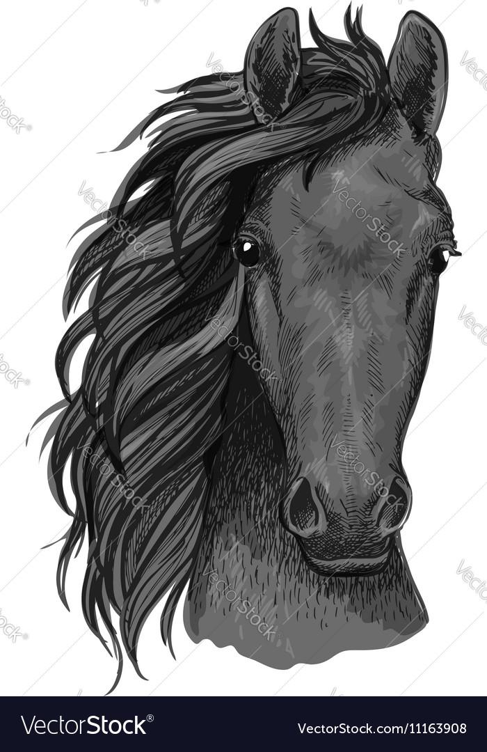 Grey Horse Sketch With Arabian Stallion Head Vector Image