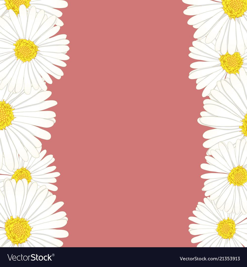 White aster daisy flower border Royalty Free Vector Image
