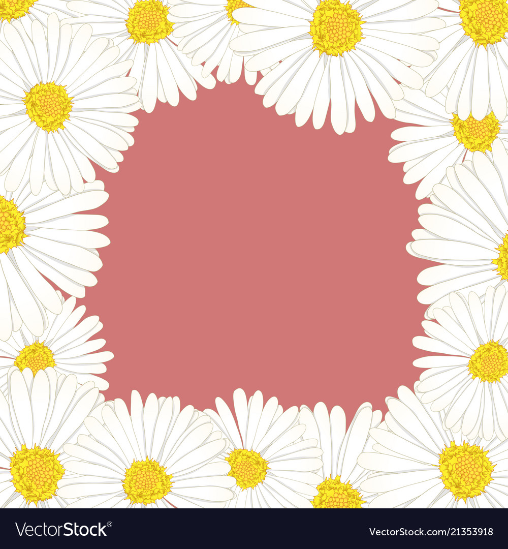 White Aster Daisy Flower Border Royalty Free Vector Image