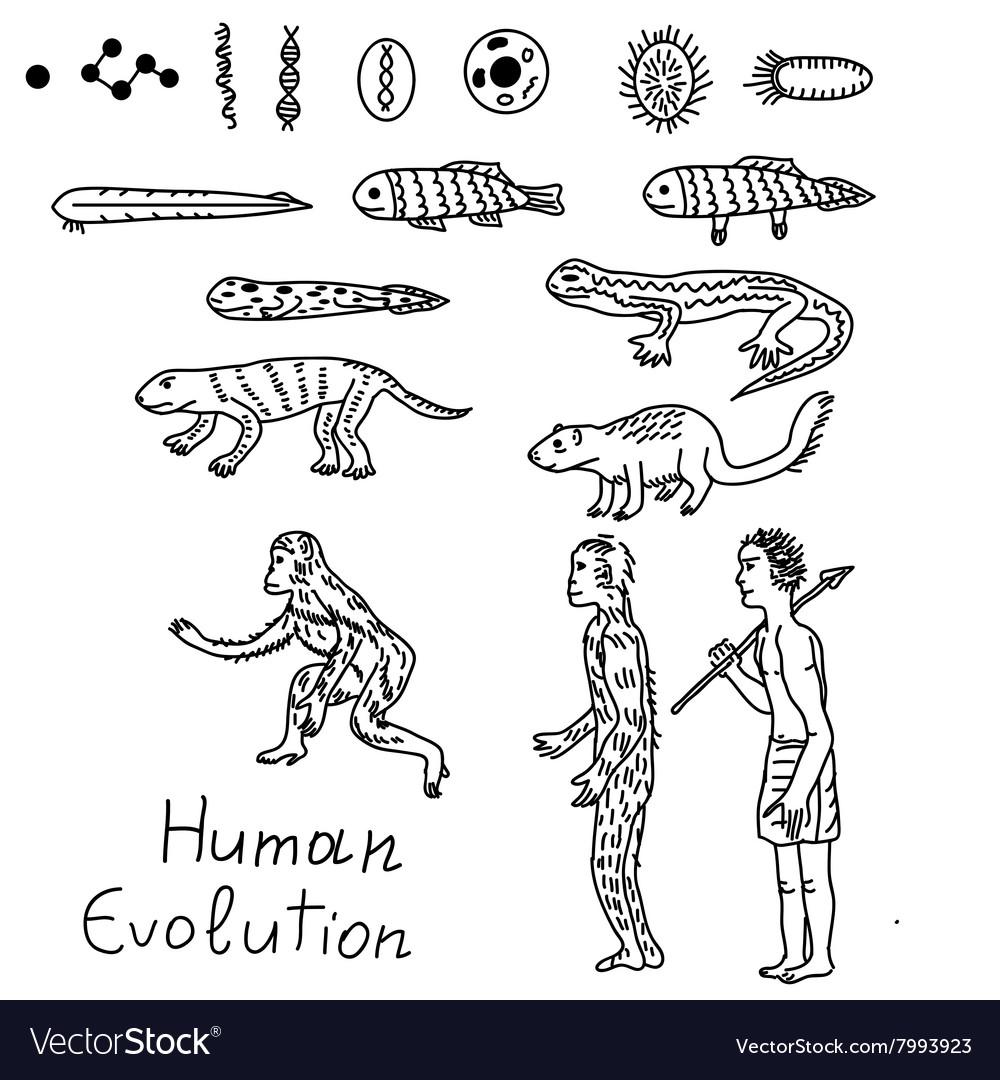 Human evolution vector image