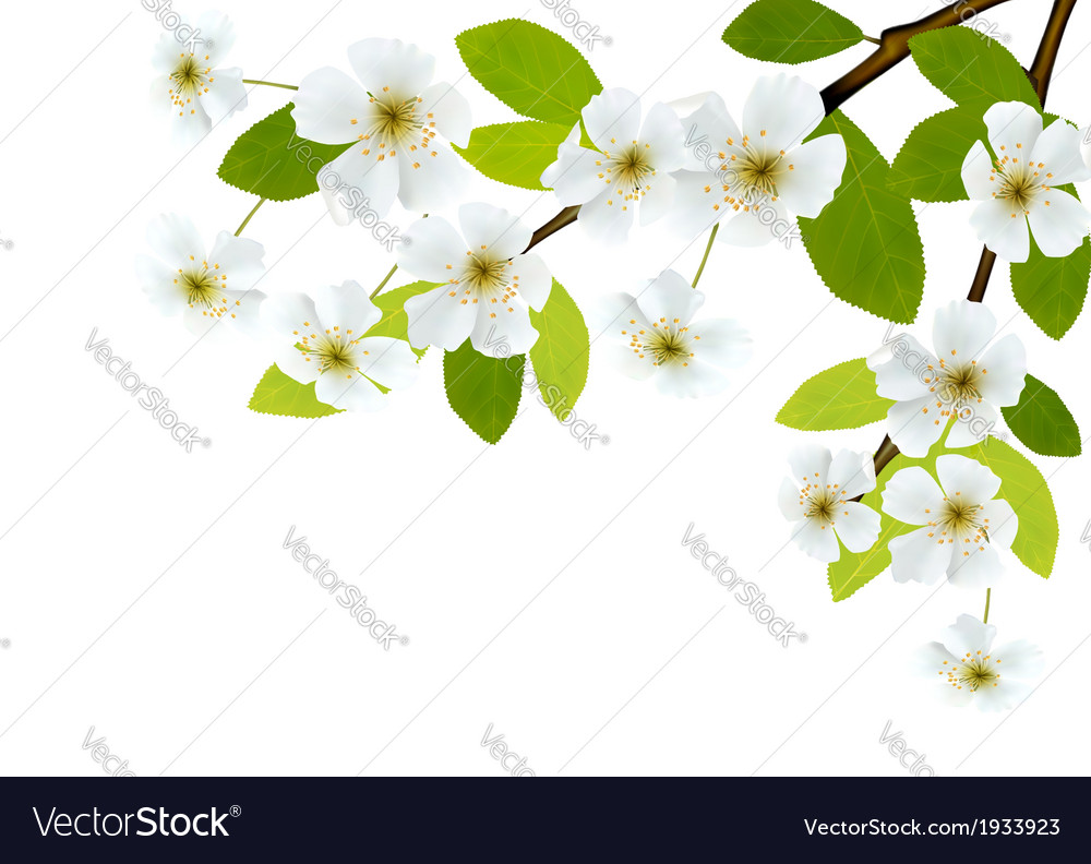 Nature background with blossoming tree brunch and