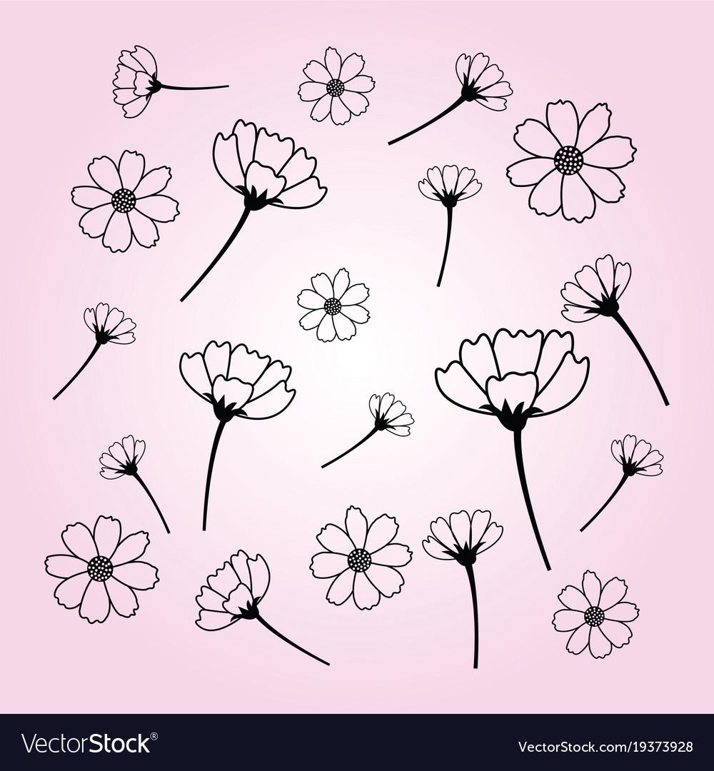 Sweet cosmos flowers hand drawn black flower