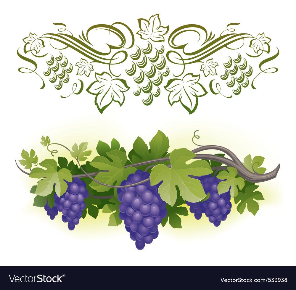 Ripe grapes on the vine vector image