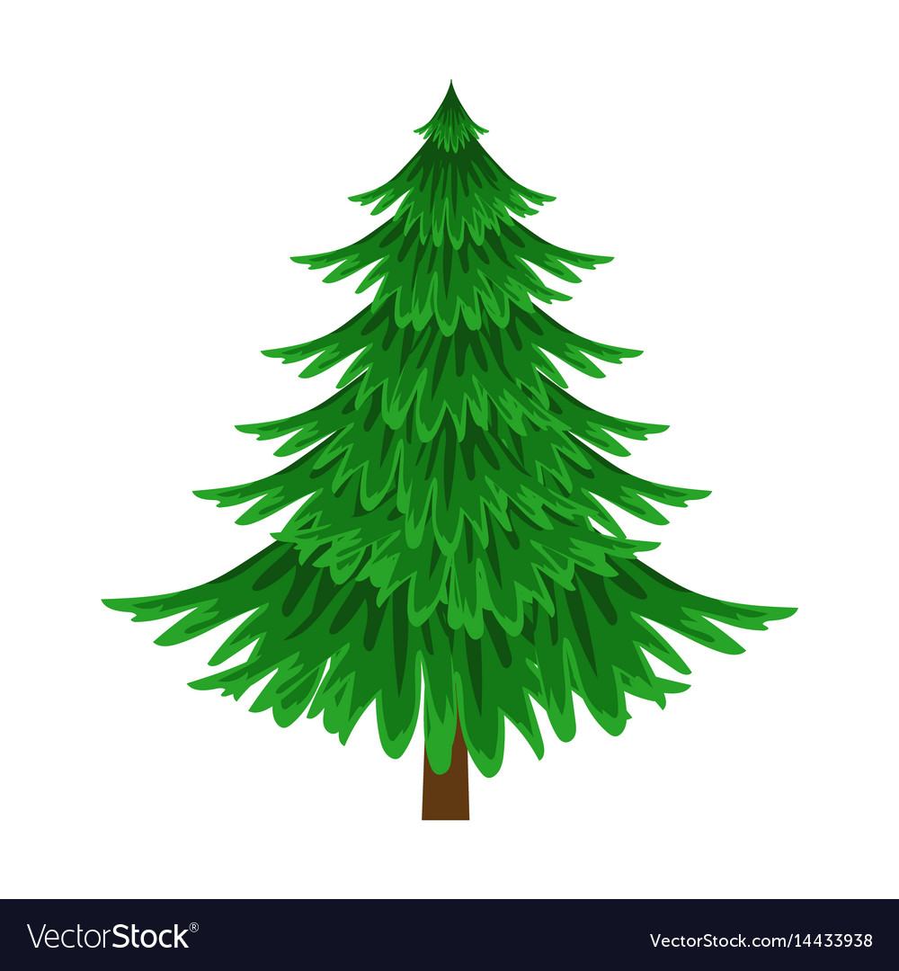 Spruce evergreen tree element of a landscape vector image
