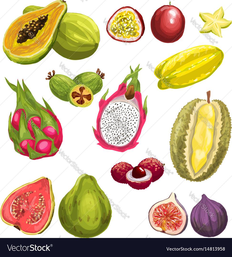 Exotic tropical fresh fruit watercolor set design