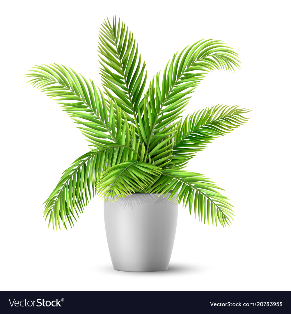 Palm tree leaves in a pot