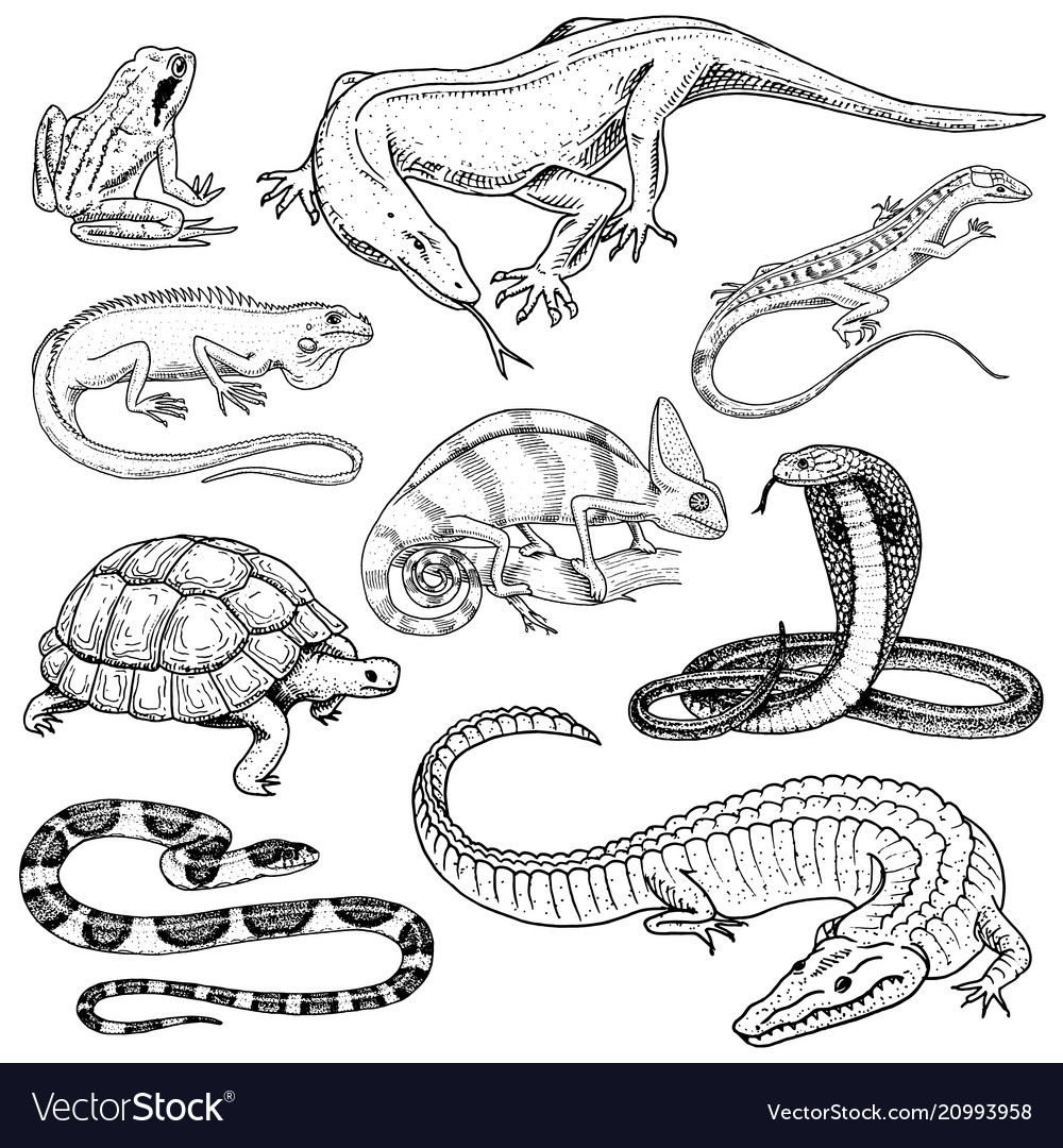 Set of reptiles and amphibians wild crocodile