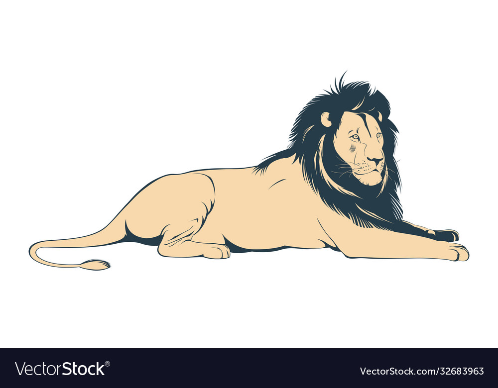 Big male lion lying on white background
