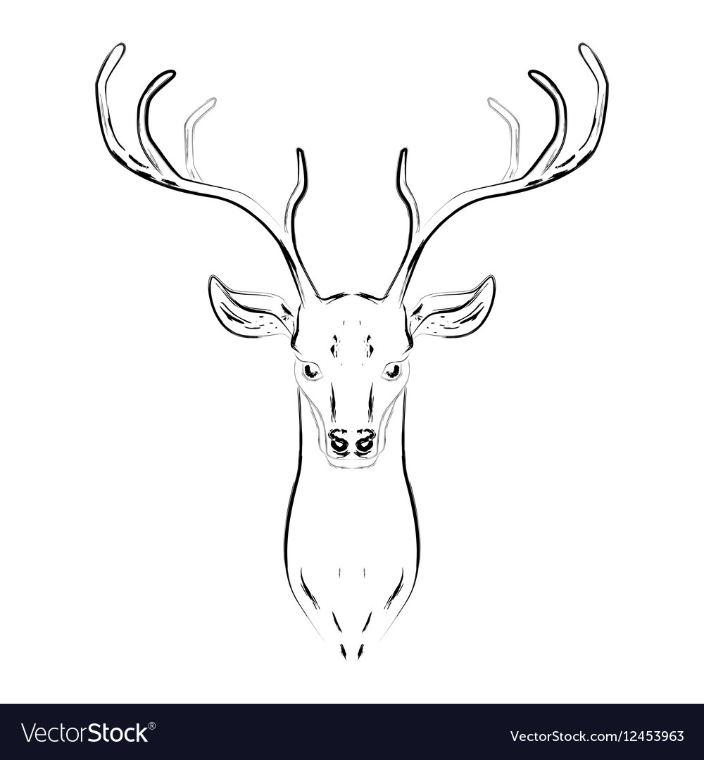 Male deer with horns head