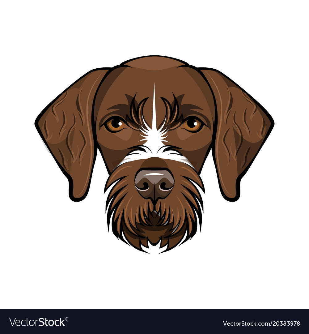 Hunting dog german wirehaired point Royalty Free Vector
