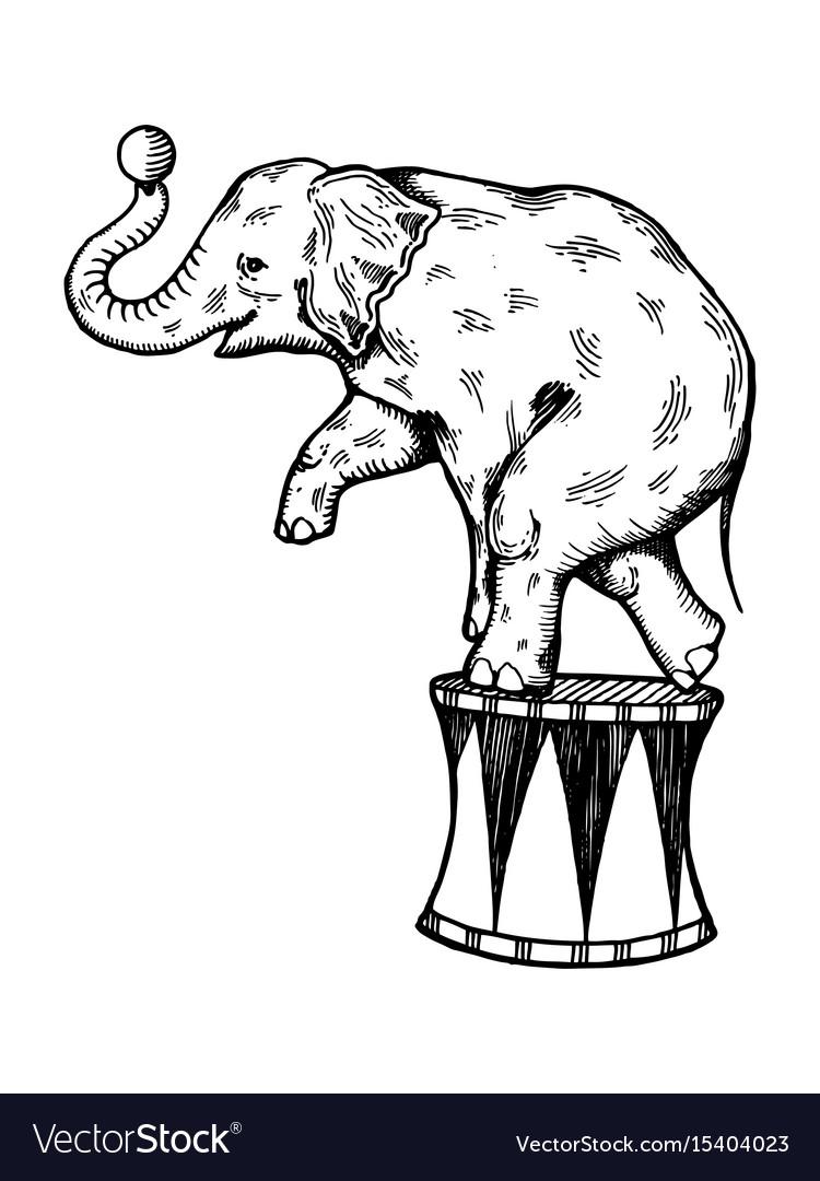 Circus elephant engraving vector image