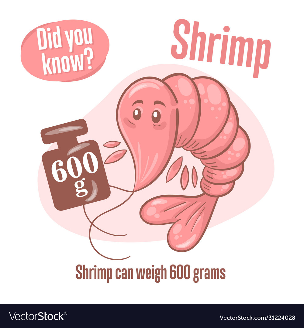 Prawn interesting facts about shrimp did you know Vector Image