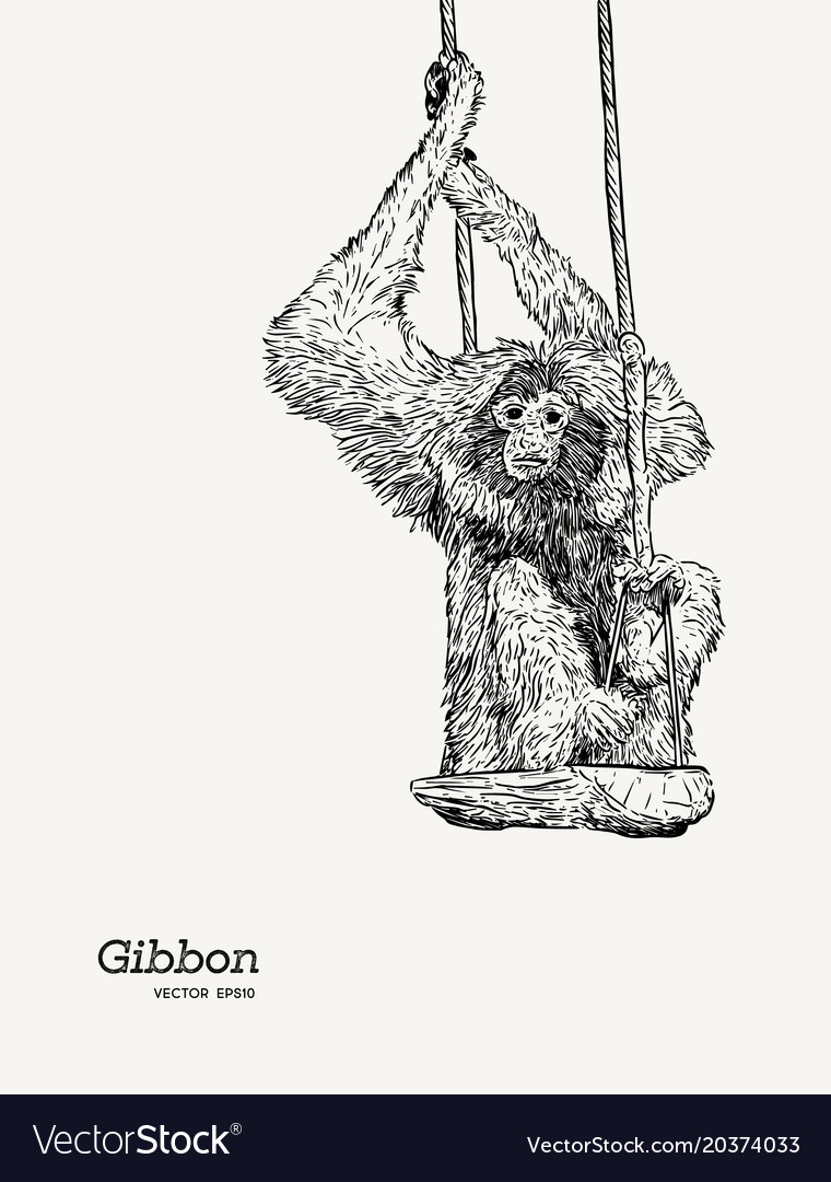 Gibbon monkey sketch graphic drawing vector image