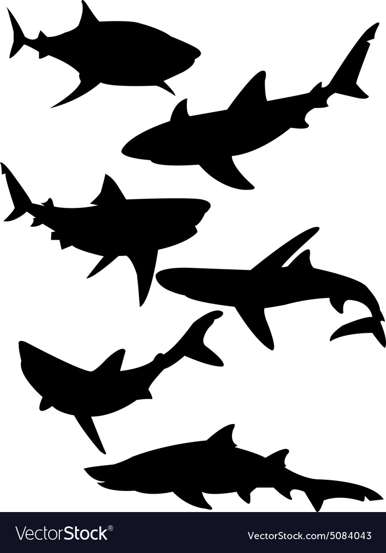 Sharks 2 vector image