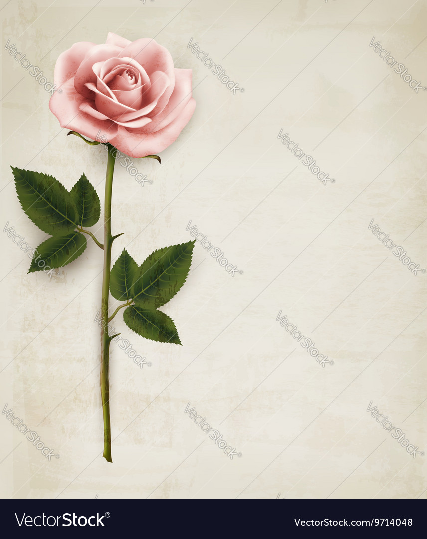 Single Pink Rose On An Old Paper Background Vector Image