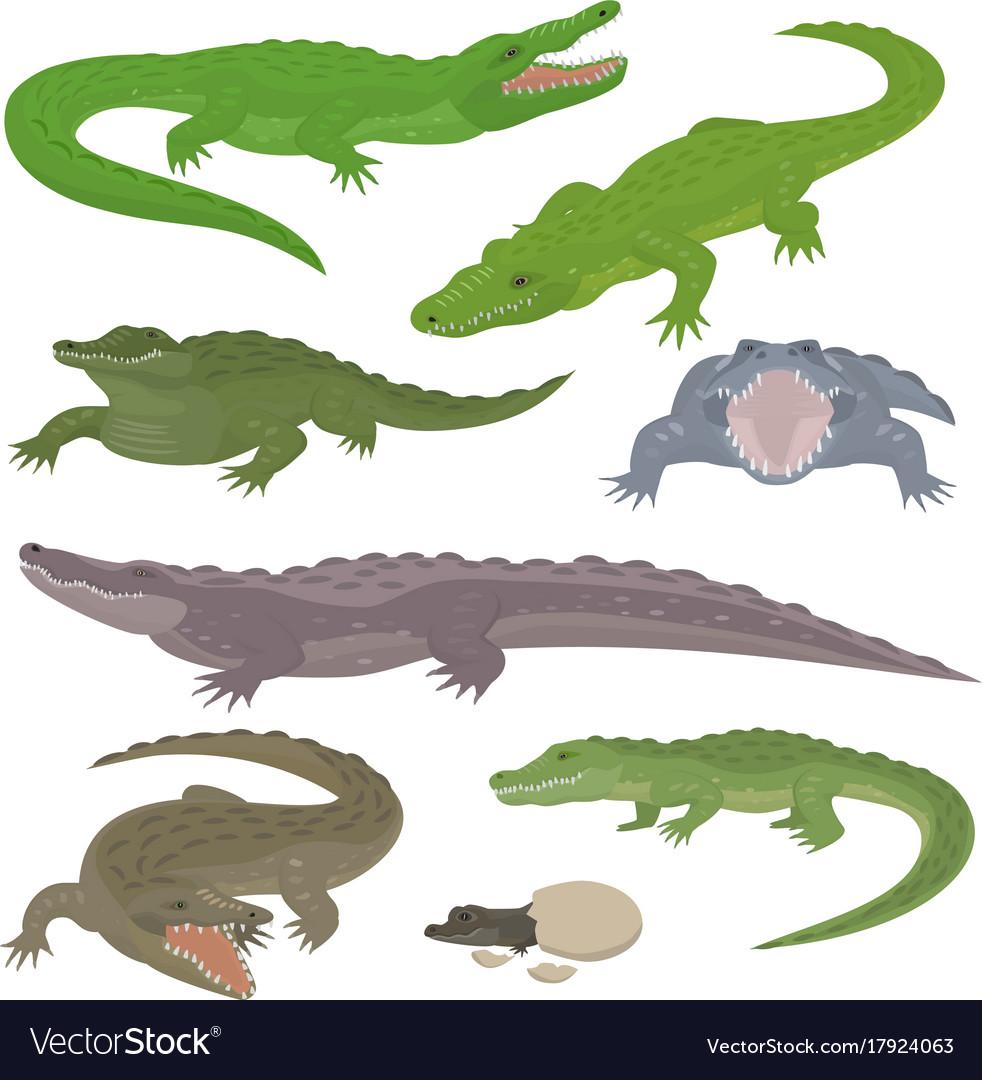 Green crocodile and alligator reptile wild animals