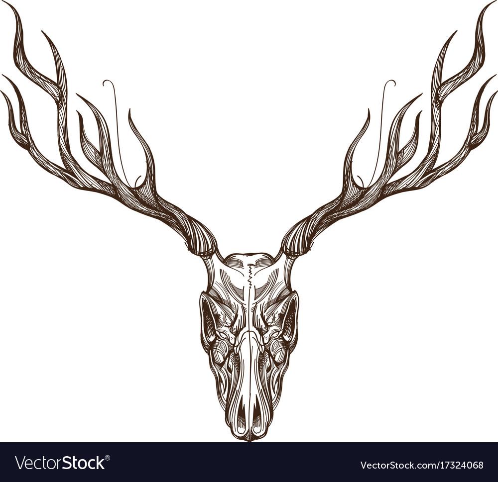 Sketch of deer skull outline for tattoo printing vector image