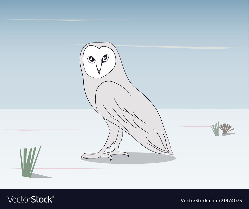 An owl stands in the nature