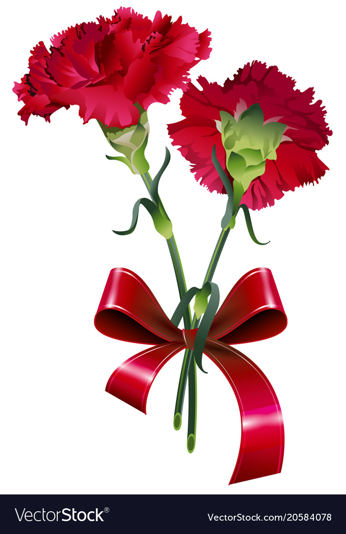 bouquet of red carnation flower isolated on white vector image