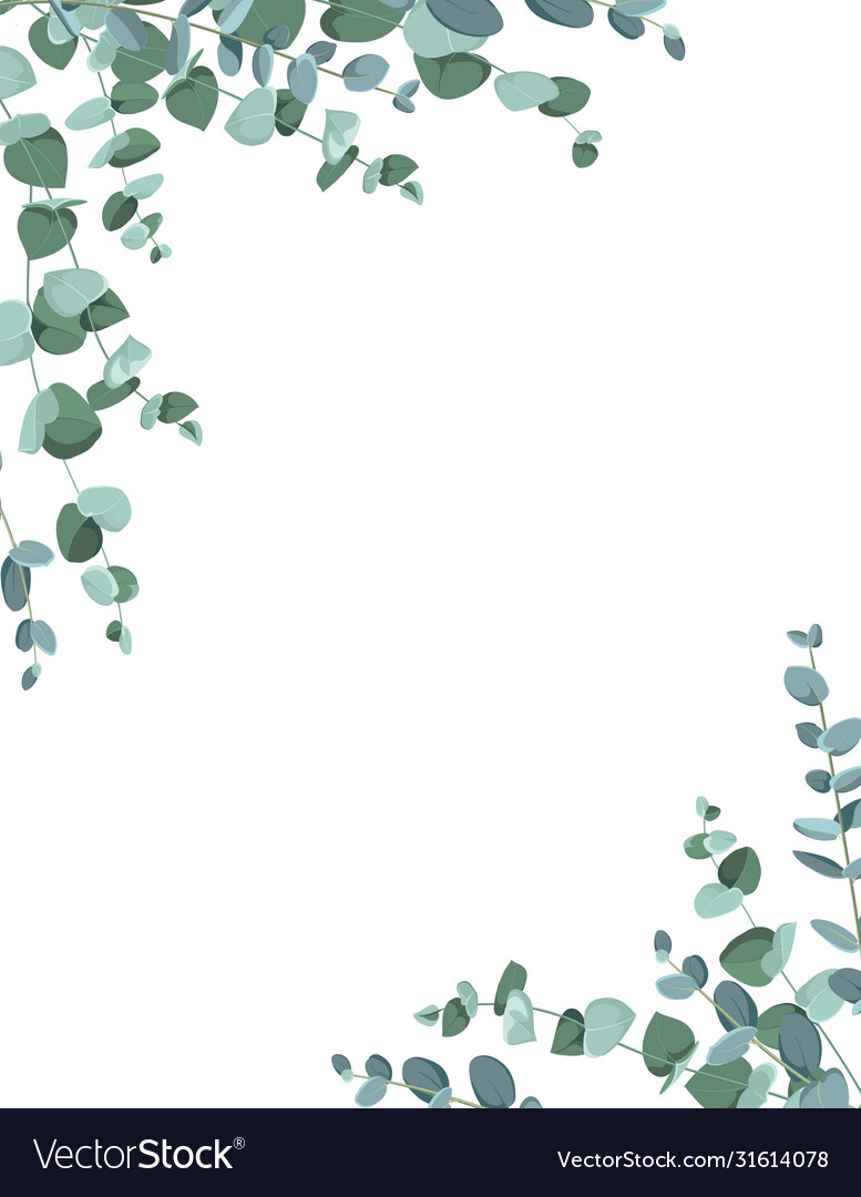Eucalyptus border frame on white background