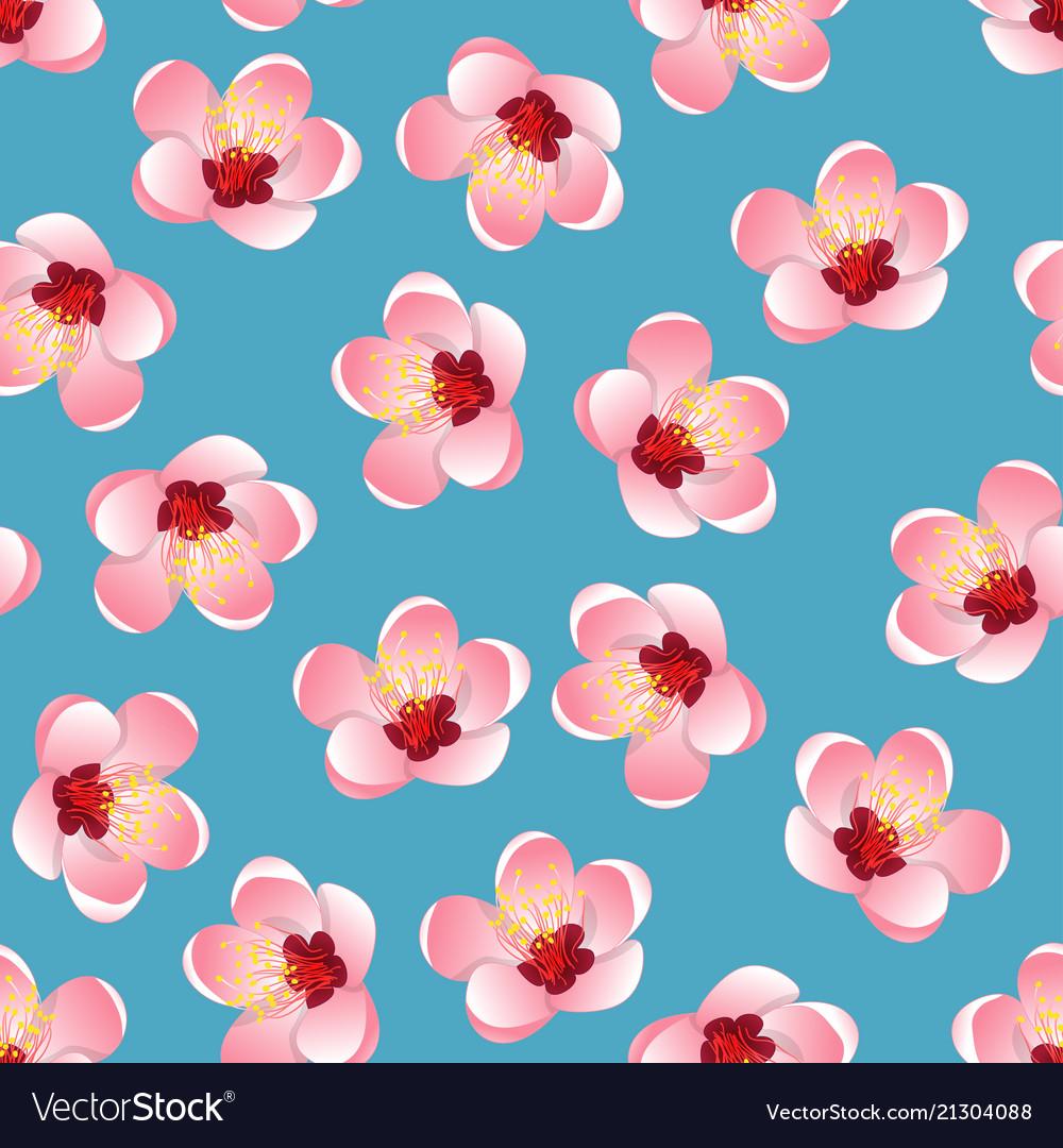 Momo peach flower blossom on blue background vector image