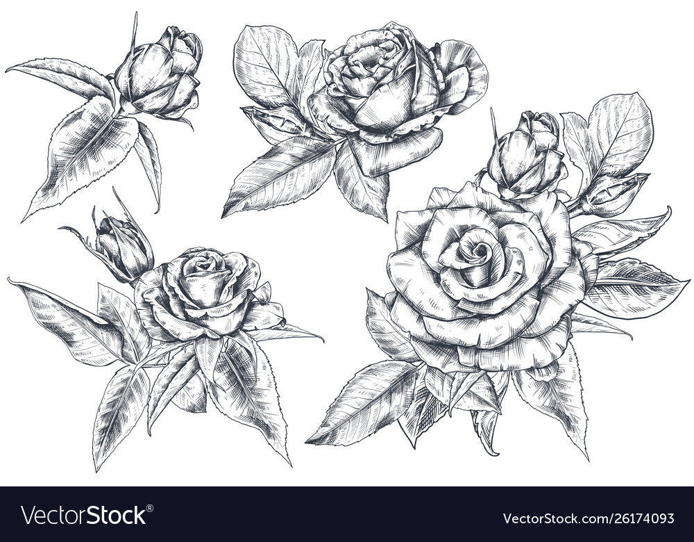Set hand drawn rose flowers and leaves isolated