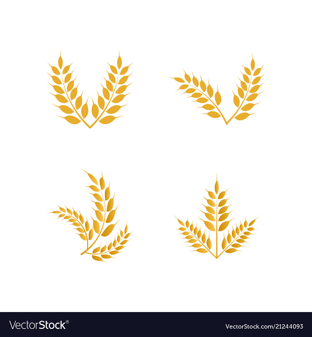 Wheat yellow logo icon template