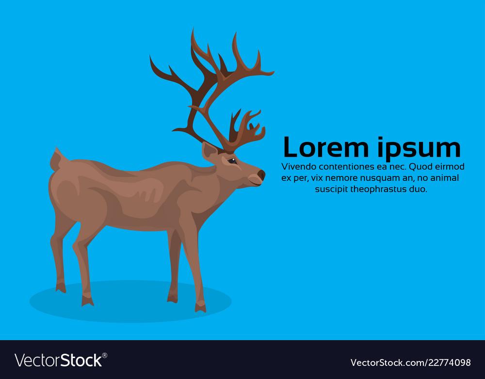 Deer cartoon animal reindeer flat blue background